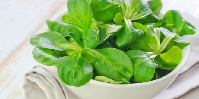 Insalata e verdure crude pronte: meglio lavarle di nuovo. Batteri patogeni nel 5% dei campioni testati in Germania