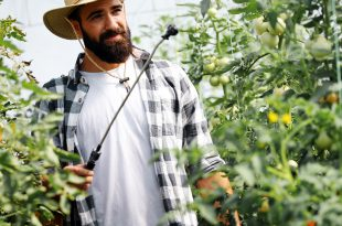 pesticidi pomodori serra