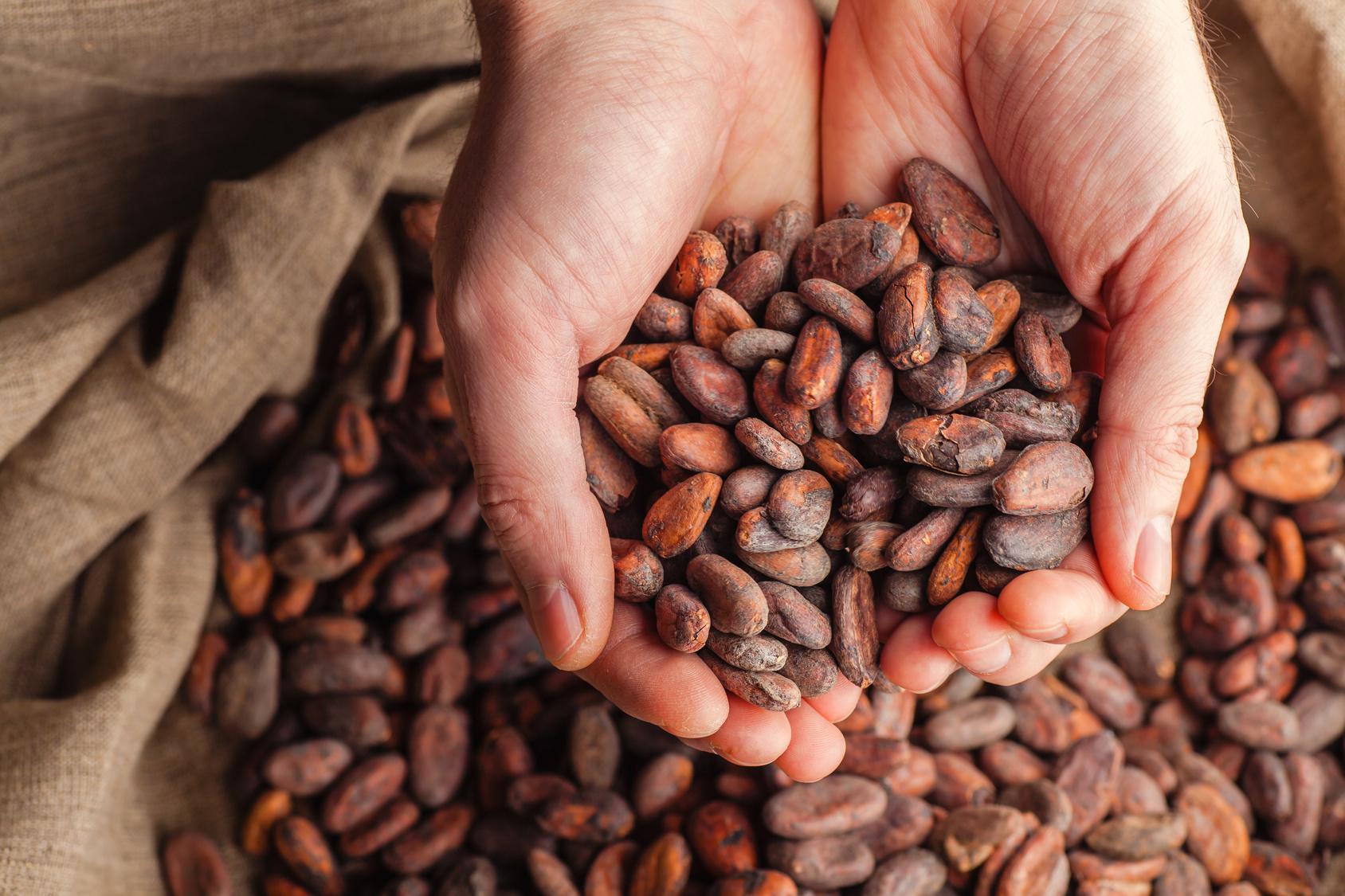 cacao semi sacco mani
