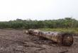 olio di palma deforestazione borneo indonesia 2018