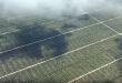 Olio di palma, sottostimato l'impatto su ambiente e atmosfera delle piantagioni in Indonesia. Lo studio dei ricercatori svizzeri