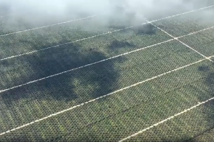 olio di palma piantagioni borneo indonesia 2018
