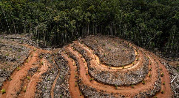 PT Megakarya Jaya Raya (PT MJR) Palm Oil Concession in Papua