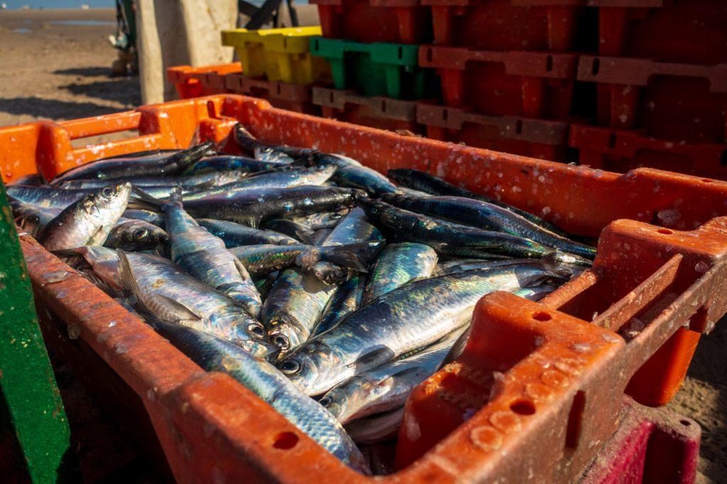 pesci pesca pesce