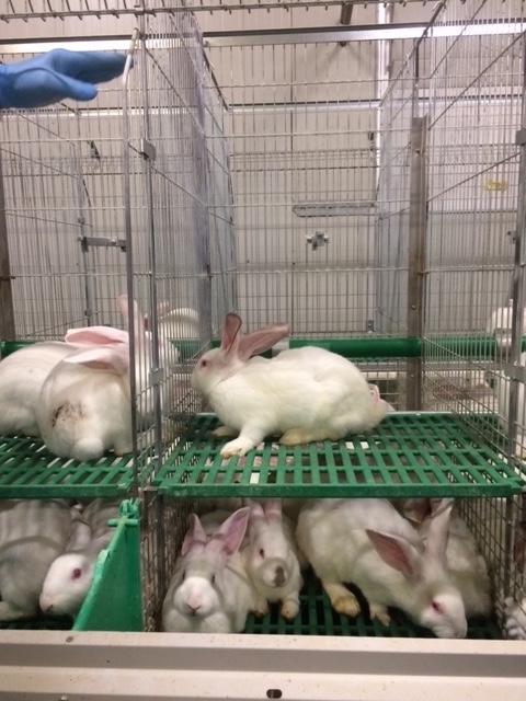 conigli gabbia benessere