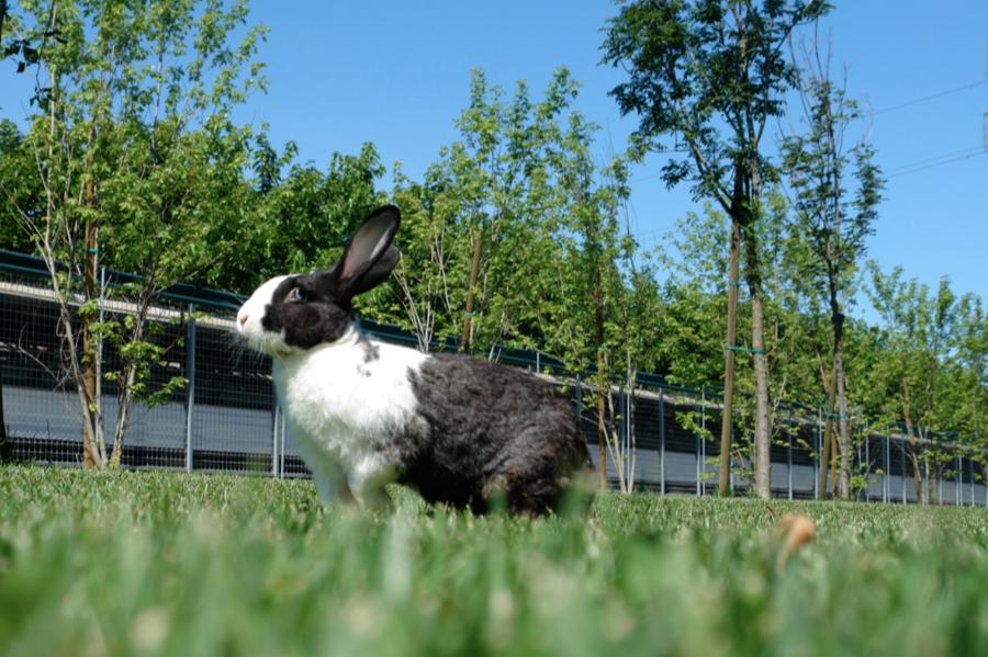 conigllo conigli