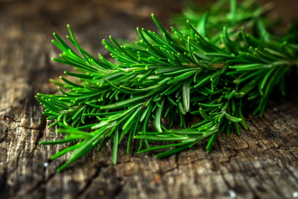 rosmarino odori erbe aromatiche piante