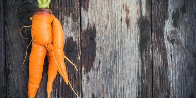 Ugly carrot on barn wood