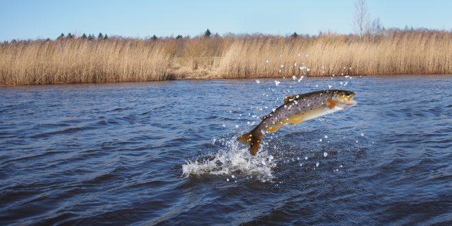salmoni salmone pesce mare