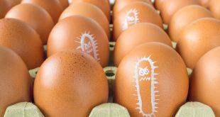 Salmonella bacterium drawn on eggs