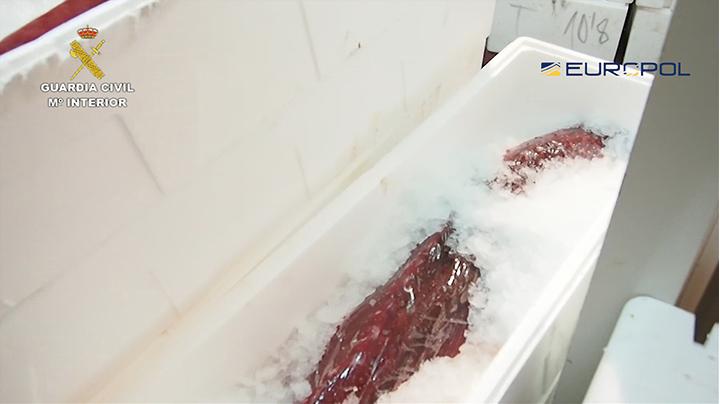 guardia civil europol tonno rosso ghiaccio
