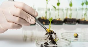 Scientist testing GMO plant in biological laboratory