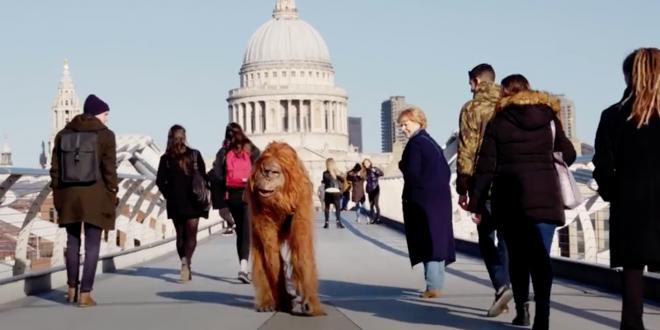 I supermercati britannici Iceland per un Natale in difesa degli orangotanghi. Iniziative natalizie contro l'olio di palma, causa di deforestazione