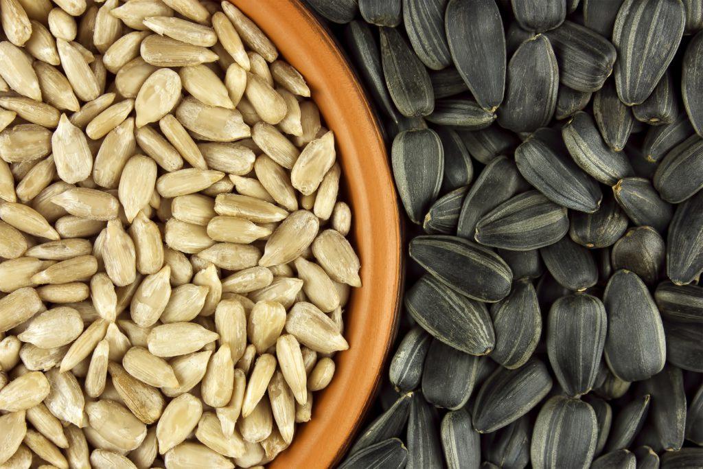 semi di girasole Salmonella