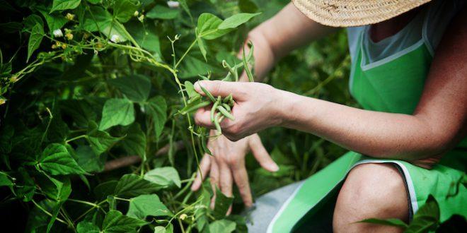 Il primo marchio per tutelare i diritti dei lavoratori agricoli negli Stati Uniti. La certificazione dell'Agricultural Justice Project