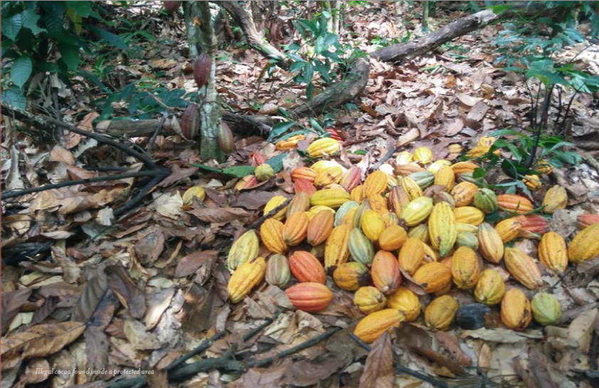 cacao illegale foreste africa might earth