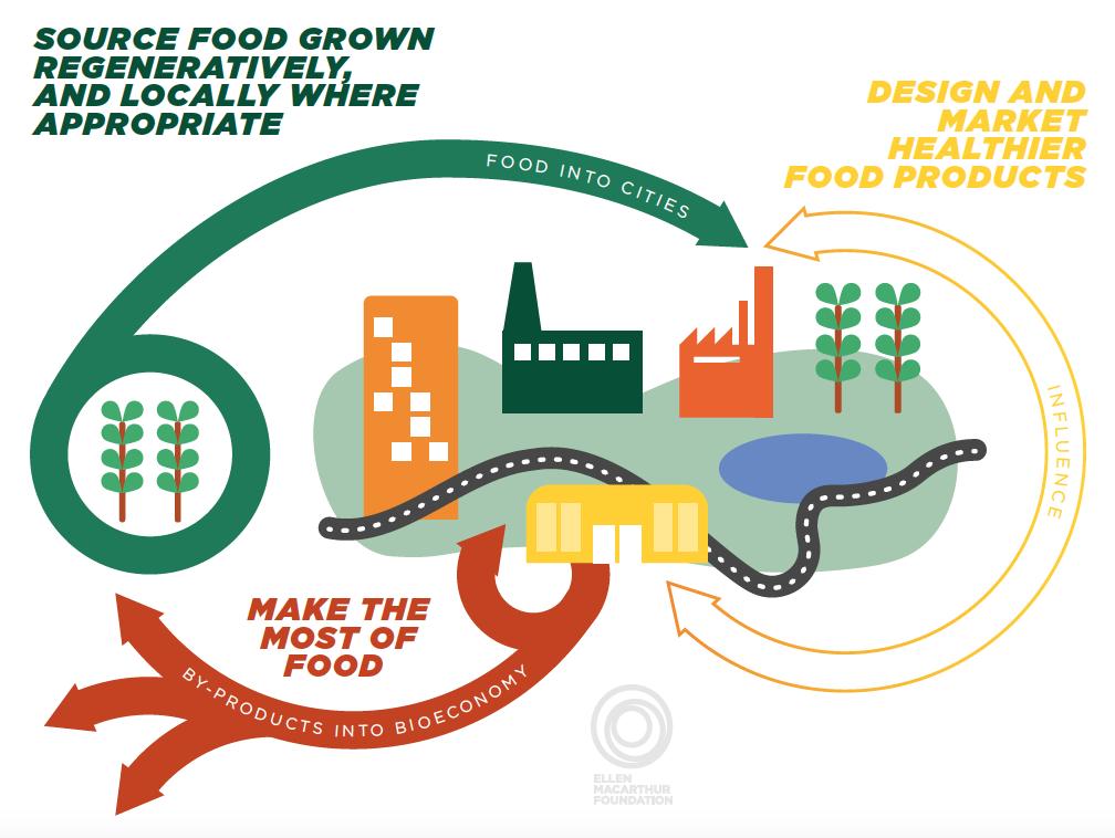economia circolare cibo ellen mcarthur foundation
