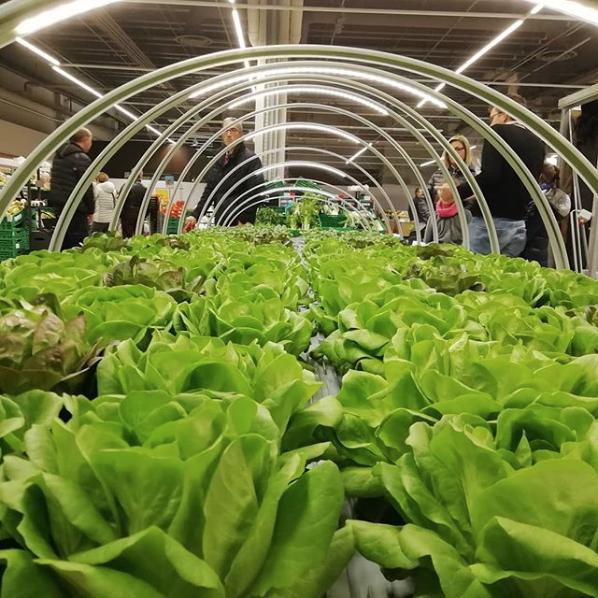 insalata agricooltur auchan serra