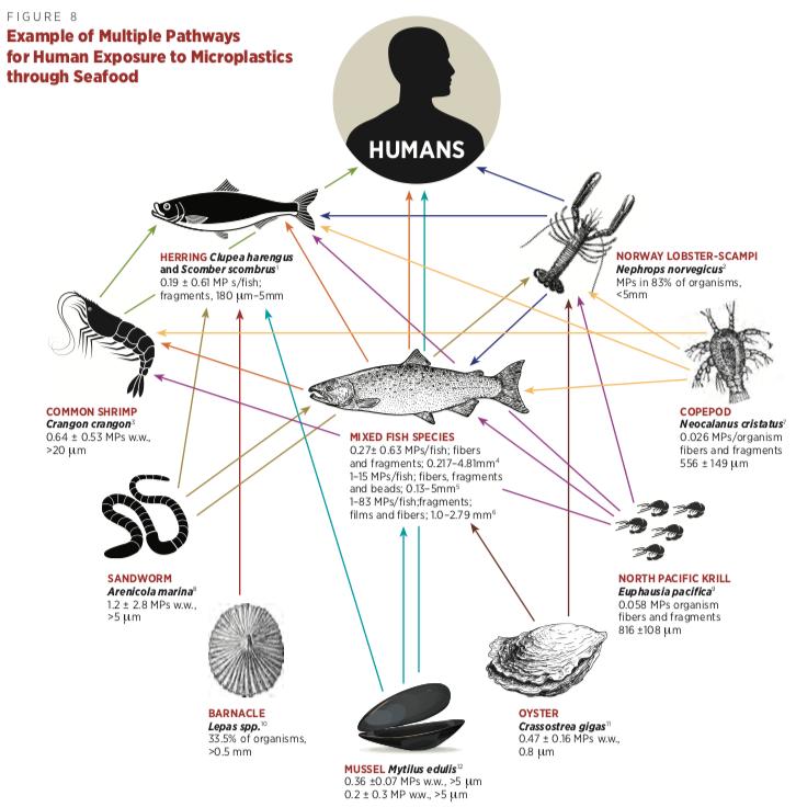 esposizione umana microplastiche pesci molluschi