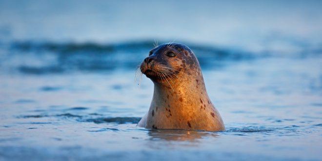 Le microplastiche contaminano anche delfini, foche e balene, ma meno del previsto. Lo studio dei ricercatori britannici su Scientific Reports