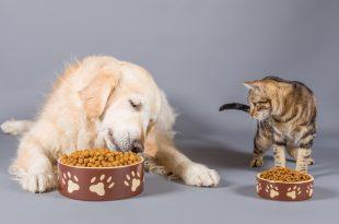 alimenti cani gatti mangime croccantini