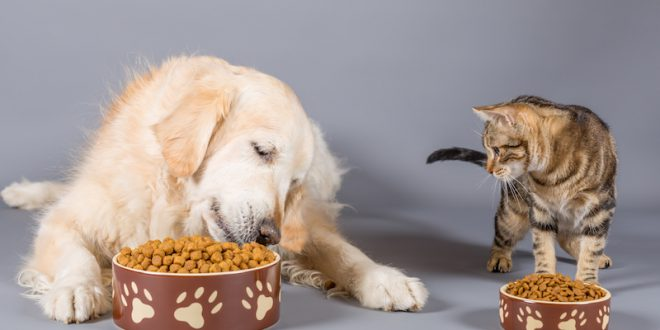 Cibo per cani e gatti: Monge corregge e migliora le etichette dopo la segnalazione di Dario Dongo