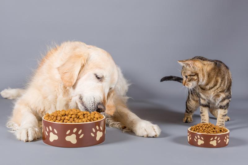alimenti cani gatti mangime croccantini cibo per animali