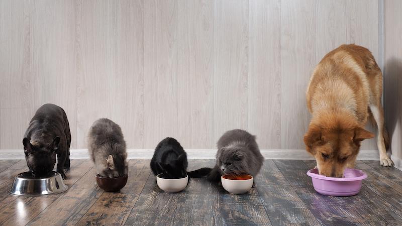 alimenti cani gatti mangime croccantini Cibo per cani e gatti
