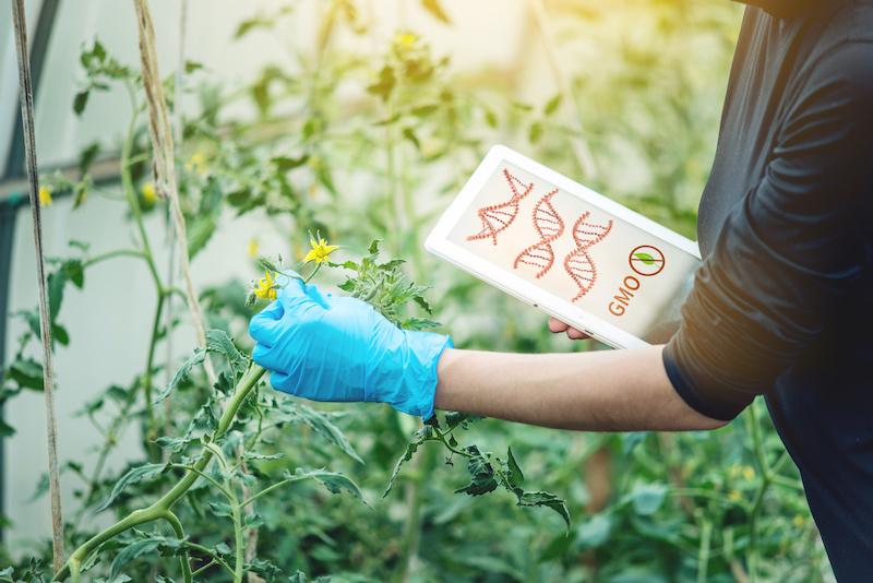ogm gmo alimenti sicurezza alimentare ricerca Editing genetico