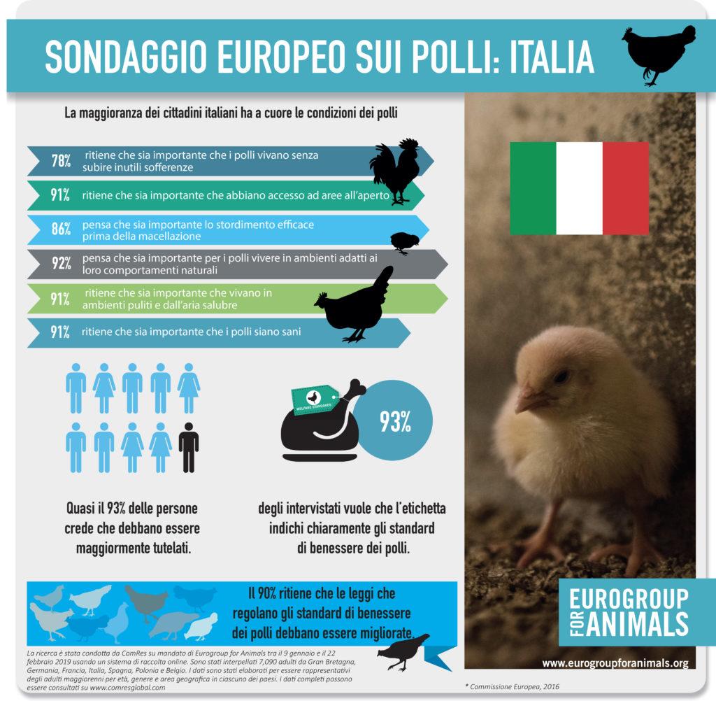 uitdr EFA infographic broiler chicken_ITA