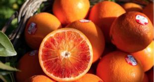 arancia rossa sicilia igp instagram