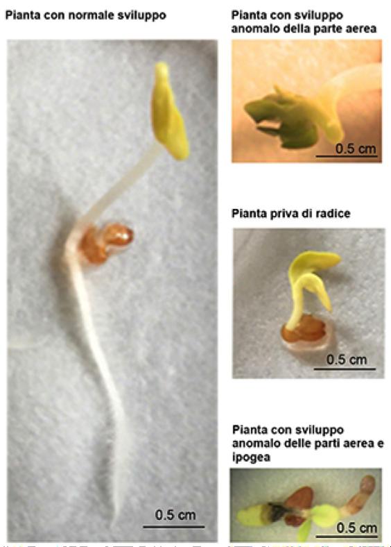 sviluppi germogli pisa sacchetti biodegradabili