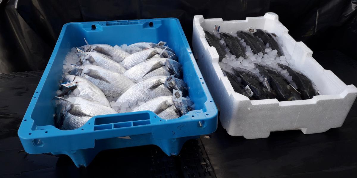 casse azzurre unicoop firenze polistirolo pesce