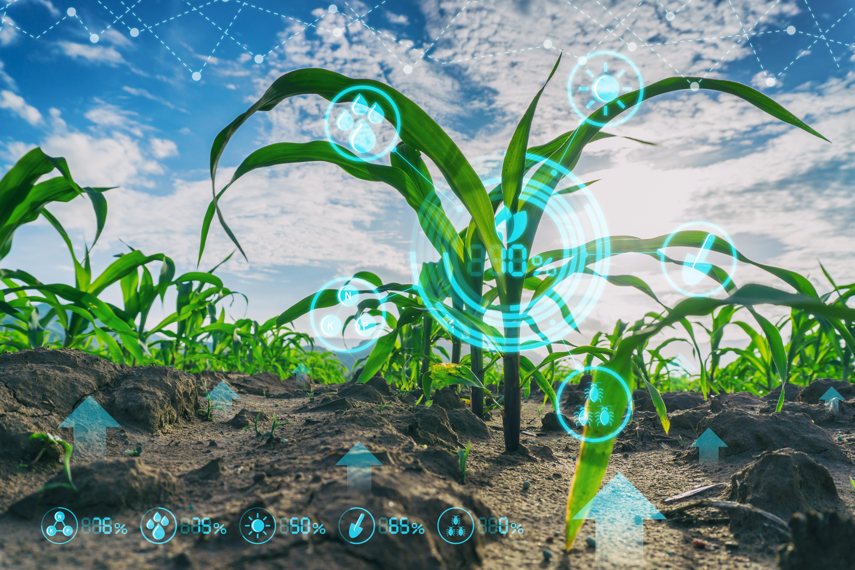innovazione tecnologia agricoltura piante mediterraneo