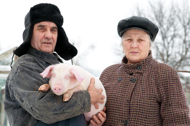 russia maiali famiglia allevamento Impronta ambientale
