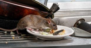 topo cucina piatto igiene padella