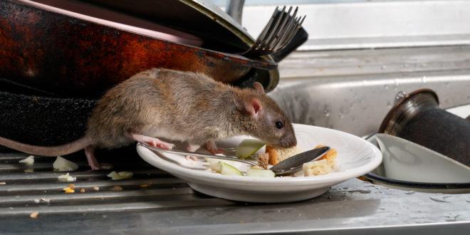 Bassi standard igienici nei ristoranti di Just Eat e Deliveroo. L'inchiesta della BBC