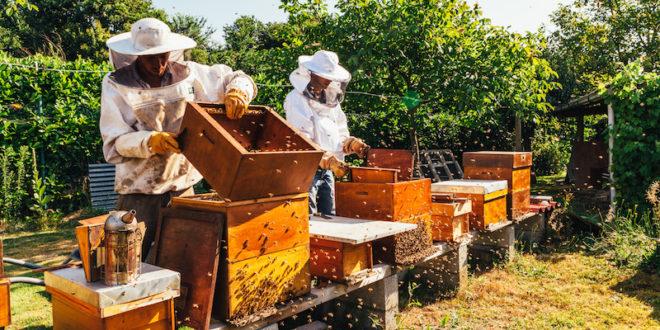 Slovenia: la storia di un successo nella difesa delle api grazie a un lungimirante piano del governo