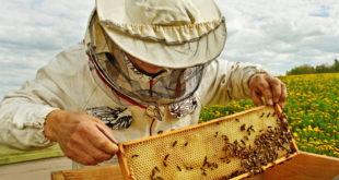 api alveari miele apicoltura