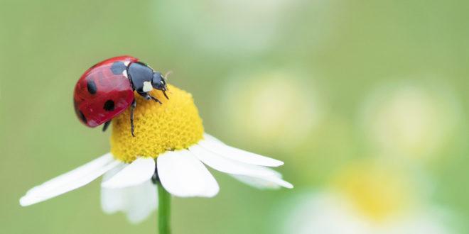 Insetti, la Germania presenta un piano per difenderli: protezione degli ambienti naturali, meno pesticidi e lotta all'inquinamento luminoso
