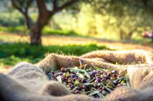 olive olio extravergine