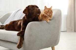 dieta crudista per cani e gatti, cane e gatto su divano bianco