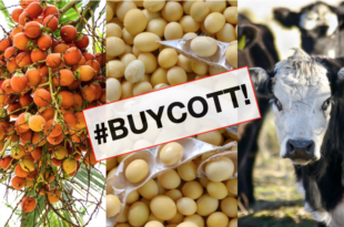 petizione olio di palma soia ogm carni americane #buycott