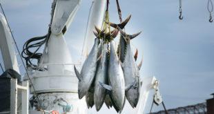 tonno pesca peschereccio