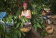 Caffè, sostenibilità ed emancipazione femminile: a Cuba il progetto di Lavazza con Oxfam documentato da Steve McCurry