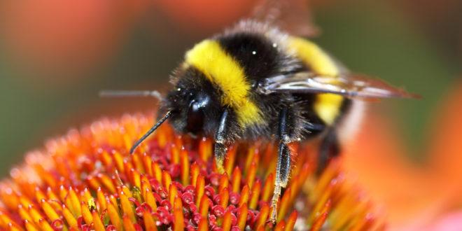 Il declino degli impollinatori: una catastrofe per le piante che dipendono dagli insetti per riprodursi