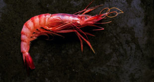 Prawn on a black stone