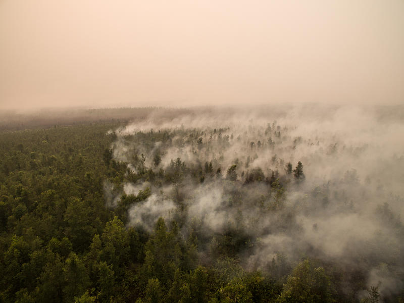 Forest Fires Investigation in PT GAL, Central Kalimantan incendio indonesia foresta olio di palma