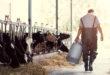 Smettere di consumare latte e derivati non sarebbe utile per il pianeta. Uno studio americano analizza gli effetti su ambiente e salute