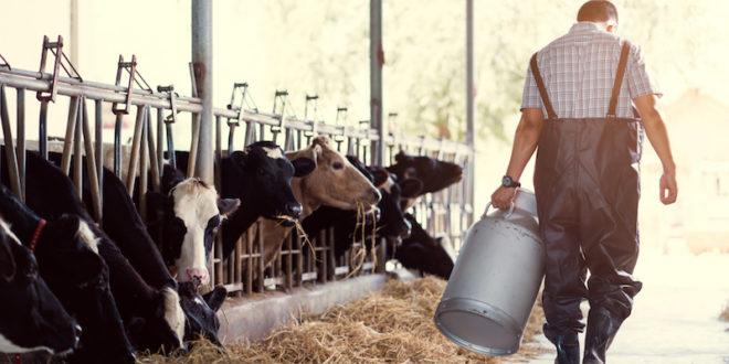 Smettere di consumare latte e derivati sarebbe utile per il pianeta? Uno studio americano che esplora gli effetti su ambiente e salute